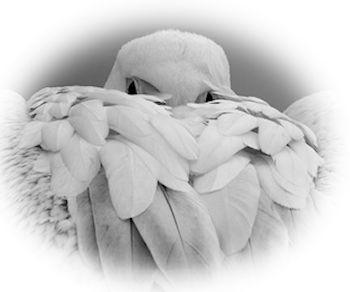 Adler Undercover ::: (c) by pixelio.de :::