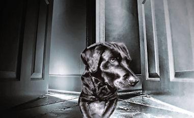 Die verletzte Seele eines Hundes