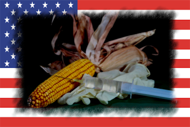 Mais Amerika TTIP Isoglucose