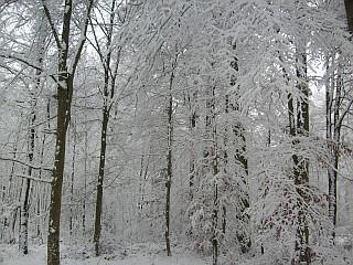 winter-dh-1-1