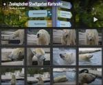 Bilder vom Zoo Karlsruhe